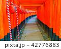 伏見稲荷大社 神社 鳥居の写真 42776883