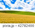 《北海道》美瑛・夏の空と麦畑 42782400