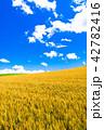 《北海道》美瑛・夏の空と麦畑 42782416