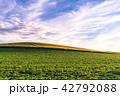 《北海道》美瑛・田園風景の夕景 42792088