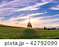 美瑛の丘 クリスマスツリーの木 畑の写真 42792090