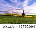 美瑛の丘 クリスマスツリーの木 畑の写真 42792094