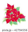 ポインセチア クリスマスフラワー 42794556