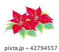 ポインセチア クリスマスフラワー 42794557