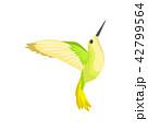 鳥 ハチドリ ハミングバードのイラスト 42799564