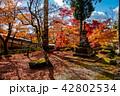 錦秋の永源寺 庭 42802534