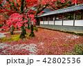 錦秋の永源寺 石庭 庭 伽藍 42802536