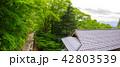 青倉神社 神社 風景の写真 42803539