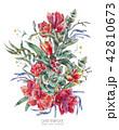 アマリリス 水彩画 花のイラスト 42810673