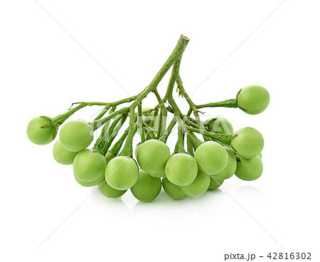 Solanum torvum on white background 42816302