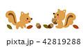 秋 リス 団栗のイラスト 42819288