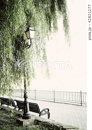 beautiful garden walkway with lamps, willow tree and bench 42821277