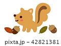 秋 リス 団栗のイラスト 42821381