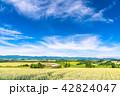 美瑛の丘 麦畑 夏の写真 42824047