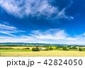 美瑛の丘 麦畑 夏の写真 42824050