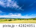 美瑛の丘 麦畑 夏の写真 42824051