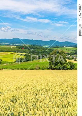 《北海道》美瑛の丘・三愛の丘より望む夏の田園風景 42824087