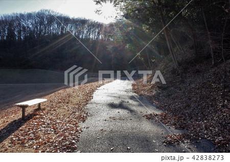 眩しい太陽の光と美しい公園のベンチ 42838273