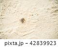 カイジ浜のヤドカリ 42839923