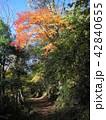 紅葉 秋 山道の写真 42840655