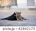 2匹の猫 42842173