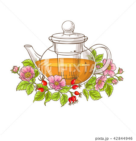 wild rose tea illustration 42844946