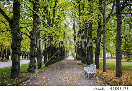 Autumn scenery of Saint Petersburg, Russia 42848478