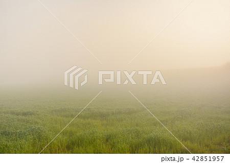 朝靄の中で 42851957