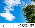 青空 雲 新緑の写真 42852457