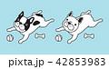 わんこ 犬 フレブルのイラスト 42853983