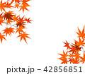 紅葉 42856851