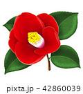 ツバキの花 42860039