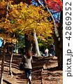 秋色に覆われた遊歩道 42869252