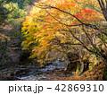桐生川の紅葉 42869310