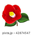 ツバキの花 42874547