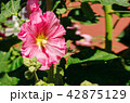 お花 フラワー 咲く花の写真 42875129