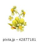 プランツ 草木 花のイラスト 42877181