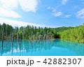 青空 夏 池の写真 42882307