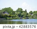 熊本市 風景 水前寺公園 42883576