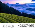 富士山 大雲海 夜明けの写真 42887465