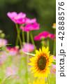 植物 花 開花の写真 42888576