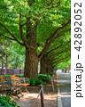 明治神宮外苑 神宮外苑 並木の写真 42892052