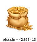 むぎ ムギ 小麦のイラスト 42896413