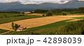 丘の町・美瑛の田園風景 42898039