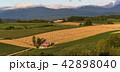 丘の町・美瑛の田園風景 42898040