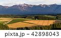 丘の町・美瑛の田園風景 42898043