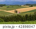 丘の町・美瑛の田園風景 42898047