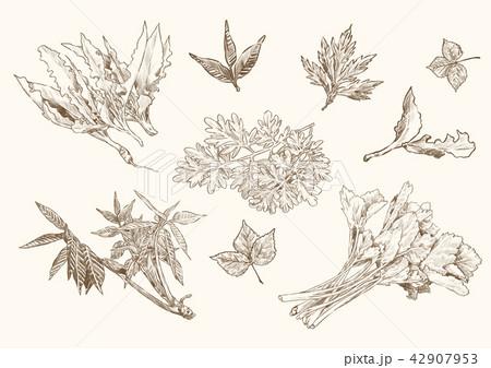 Vector - Set of fruits and vegetables, Hand drawn design elements sketch style illustration.  002 42907953
