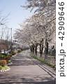 さくら サクラ 桜の写真 42909646