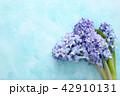 フラワー 花 ヒヤシンスの写真 42910131